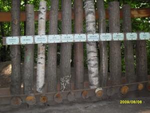 Стволы разных деревьев